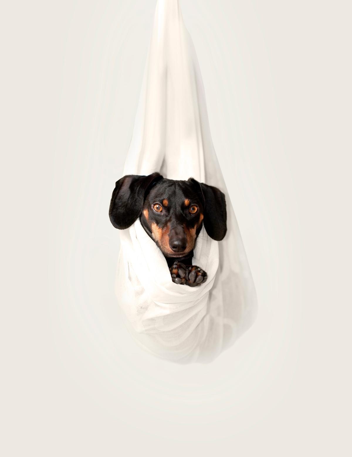 Corona Quarantäne Hund